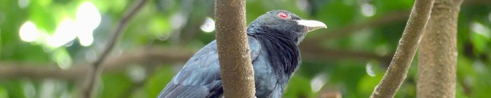 KOEL(コエル)は、朝を告げる鳥。